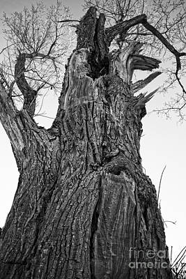 Gnarly Old Tree Print by Edward Fielding