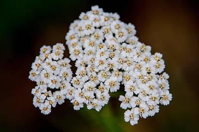 Wild Photograph - Gods Bridal Bouquet by John Haldane