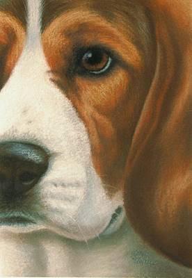 Goggie Beagle Original by Karen Coombes
