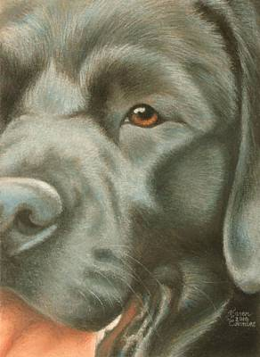 Breed Study Pastel - Goggie Black Lab by Karen Coombes