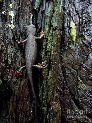 Newts Photograph - Going Up by JoAnn SkyWatcher