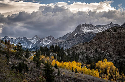 Golden Aspens And Snow Print by Cat Connor