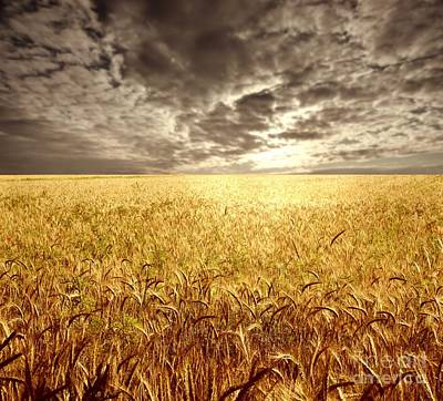 Golden Beautiful Wheat Farm Print by Boon Mee