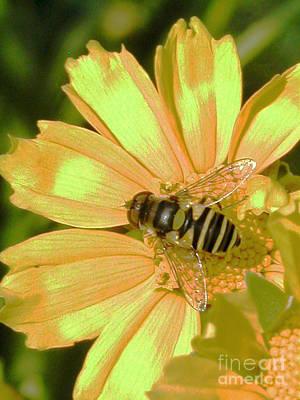 Golden Bee Print by Karol Livote