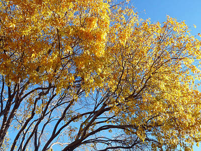 Golden Boughs Print by Rhonda Chase