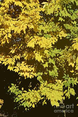 Acorn Digital Art - Golden Branches by Carol Lynch