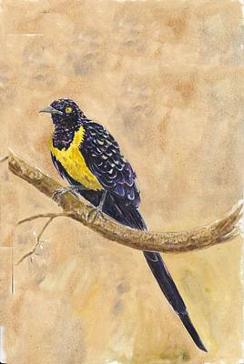 Starlings Painting - Golden Breasted Starling by Wayne Monninger