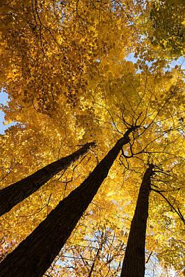Golden Canopy - Three Trees Vertical Print by Georgia Mizuleva