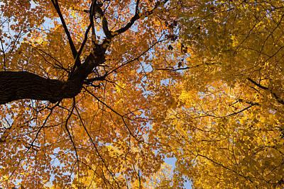 Golden Canopy - Twisted Tree Trunk Horizontal Print by Georgia Mizuleva