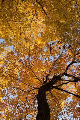 Golden Canopy - Twisted Tree Trunk Vertical Print by Georgia Mizuleva