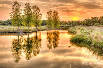 Photograph - Golden Dance Reflections by Greg Summers