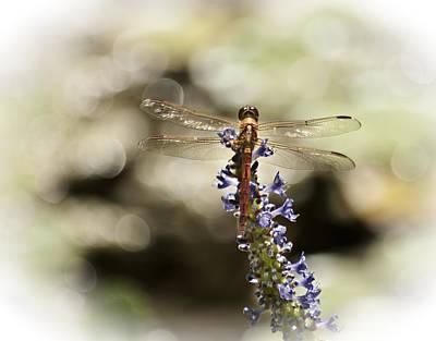 Florida Flowers Digital Art - Golden Dragonfly by Carolyn Marshall