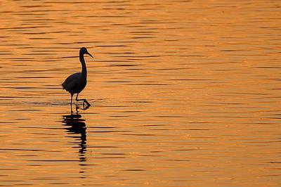 Egrets Photograph - Golden Egret by Paul Neville