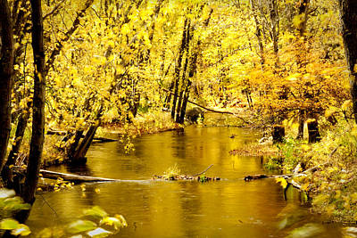 Golden Fall  Print by Greg Fortier