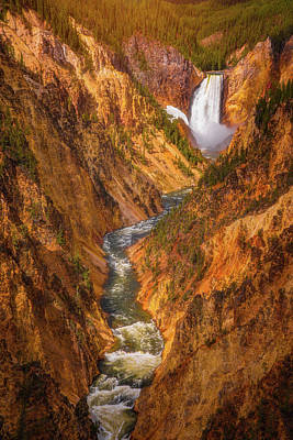 Golden Falls Of Yellowstone Print by Darren White