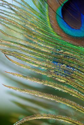 Golden Feather Print by Lisa Knechtel