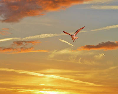 Golden Flight Print by Adele Moscaritolo
