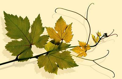 Golden Grape Vine Print by Marsha Tudor