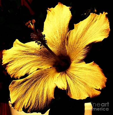 Floral Digital Art Digital Art Digital Art - Golden Hibiscus by Marsha Heiken