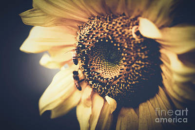 Golden Honey Bees And Sunflower Print by Sharon Mau