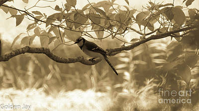 Photograph - Golden Jay by Kim Pate