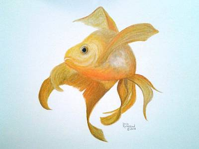 Koi Drawing - Golden Koi by David Richardson
