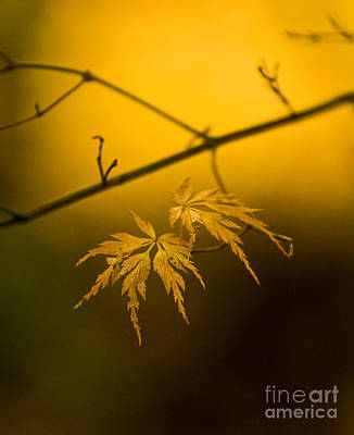 Golden Light Photograph - Golden Leaves by Mike Reid