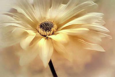 Photograph - Golden Lights by Darlene Kwiatkowski