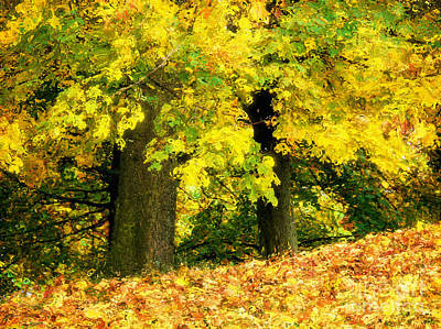 Golden October Print by Angela Doelling AD DESIGN Photo and PhotoArt