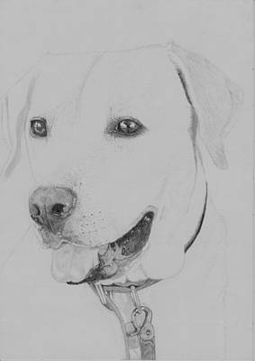 Dog Drawing - Golden Retriever by David Smith