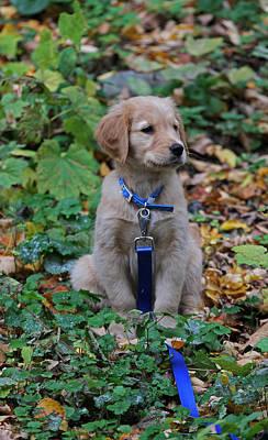 Autumn Photograph - Golden Retriever Puppy by Juergen Roth
