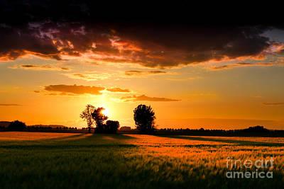 Cornfield Digital Art - Golden Sunset by Franziskus Pfleghart