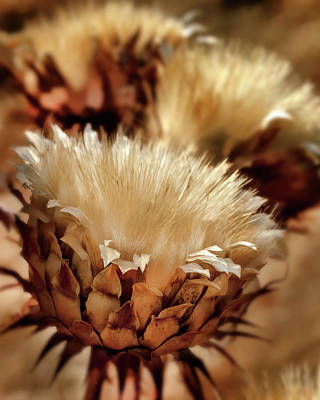 Golden Thistle II Print by Bill Gallagher