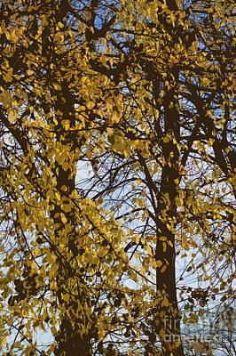 Acorn Digital Art - Golden Tree 2 by Carol Lynch