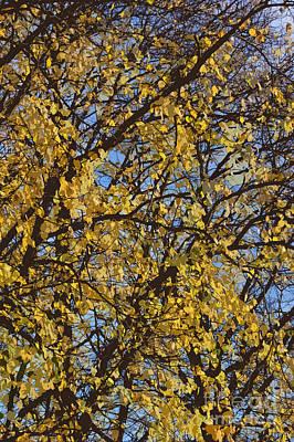 Acorn Digital Art - Golden Tree 3 by Carol Lynch