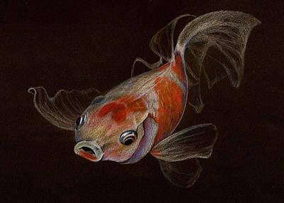 Goldfish Drawing - Goldfish by Heidi Kriel