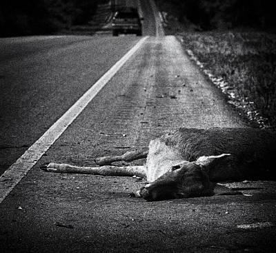 Vanish Photograph - Gone To Greener Pastures by Anne Worner