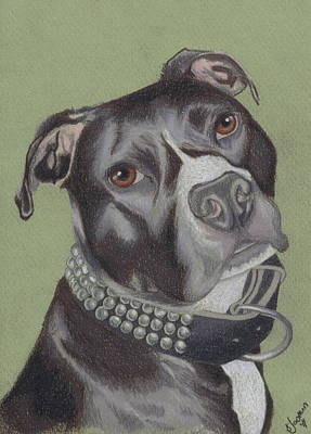 Pitbull Drawing - Gonzo by Stacey Jasmin
