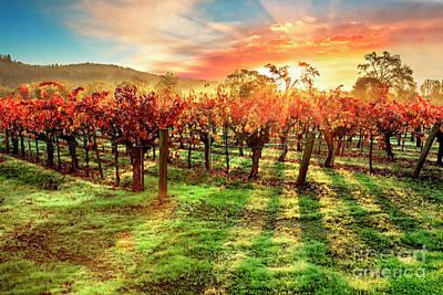 Fall Wine Grapes Photograph - Good Morning Napa by Jon Neidert