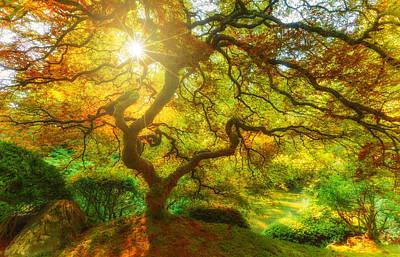 Of Autumn Photograph - Good Morning Sunshine by Darren  White