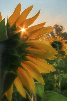 Sunflowers Mixed Media - Goodbye, Summer by Lori Deiter