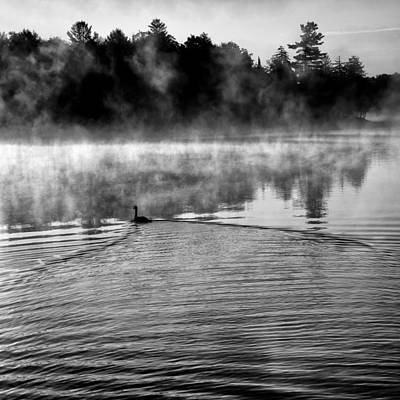 Fog Photograph - Goose In The Mist by David Patterson
