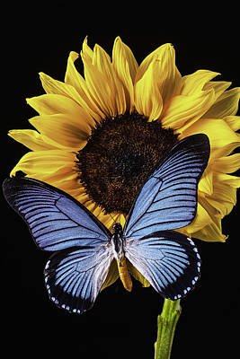 Yellow Butterfly Photograph - Gorgeous Blue Butterfly by Garry Gay