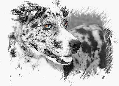 Catahoula Photograph - Gorgeous by Joyce Baldassarre