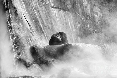 Photograph - Gorilla In The Mist by Traci Law