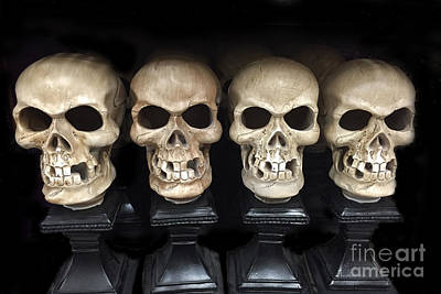 Skull Photograph - Gothic Skulls Skeleton Art - Halloween Set Of Skulls - Spooky Skeleton Heads  by Kathy Fornal
