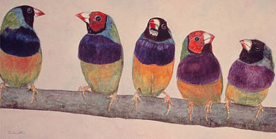 Lovebird Drawing - Gouldian Finches by Dee Van Houten