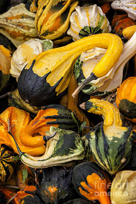 Thanksgiving Photograph - Gourds Of Color by David Millenheft