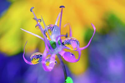 Graceful Flower In Rain Drops Original by Yuri Hope