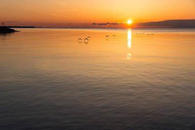 Delicately Photograph - Graceful Sunrise Flight - Gliding Over Delicately Ruffled Waters by Georgia Mizuleva